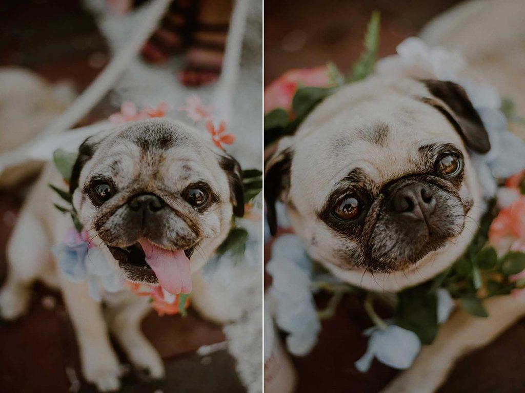 bridal pups at bonnet island wedding